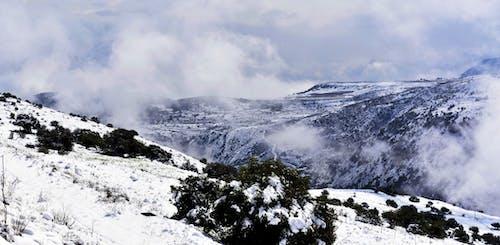 Foto d'estoc gratuïta de amb boira, arbres, hivern, muntanyes