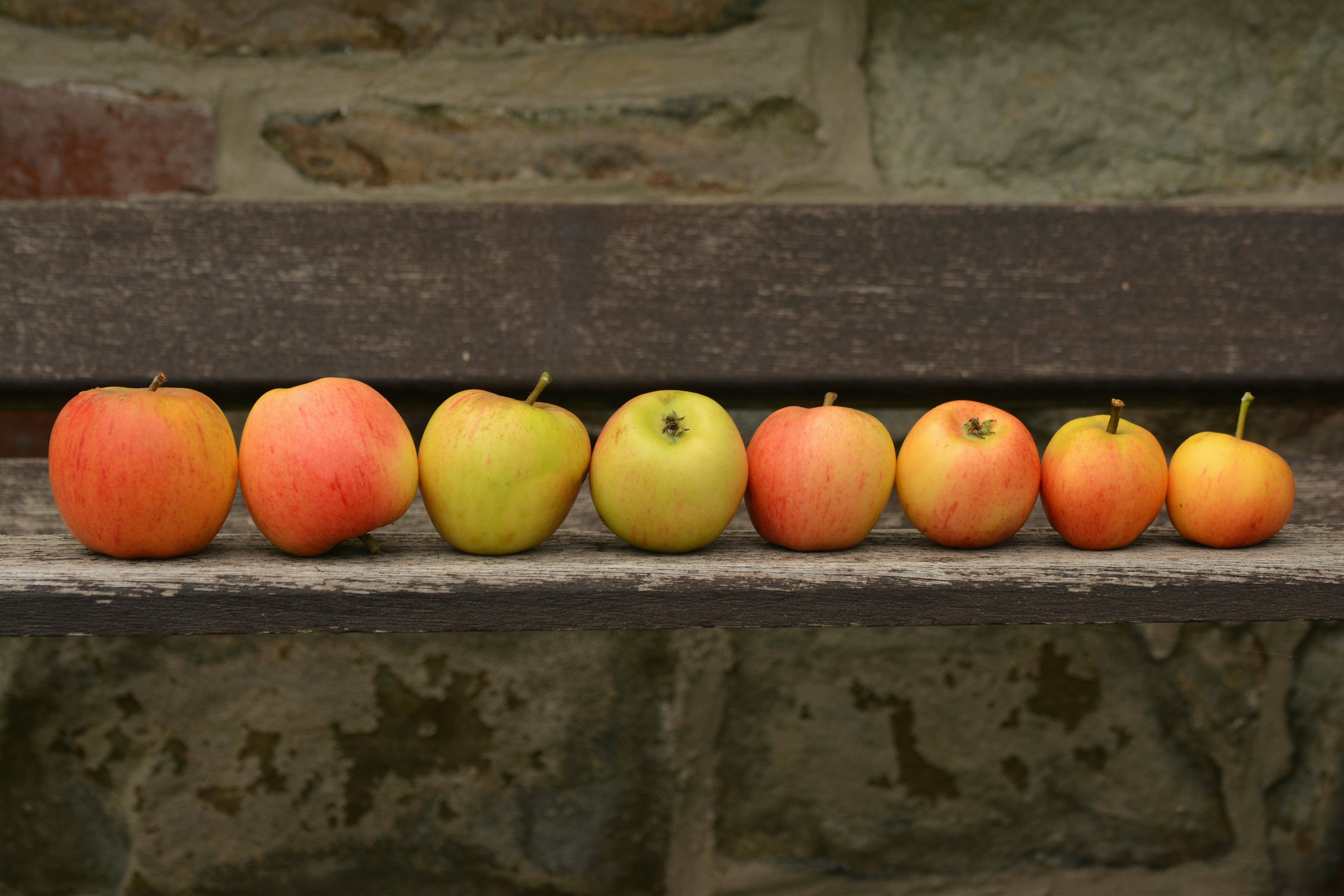 8 Apple Fruit on Top of Wooden Panel