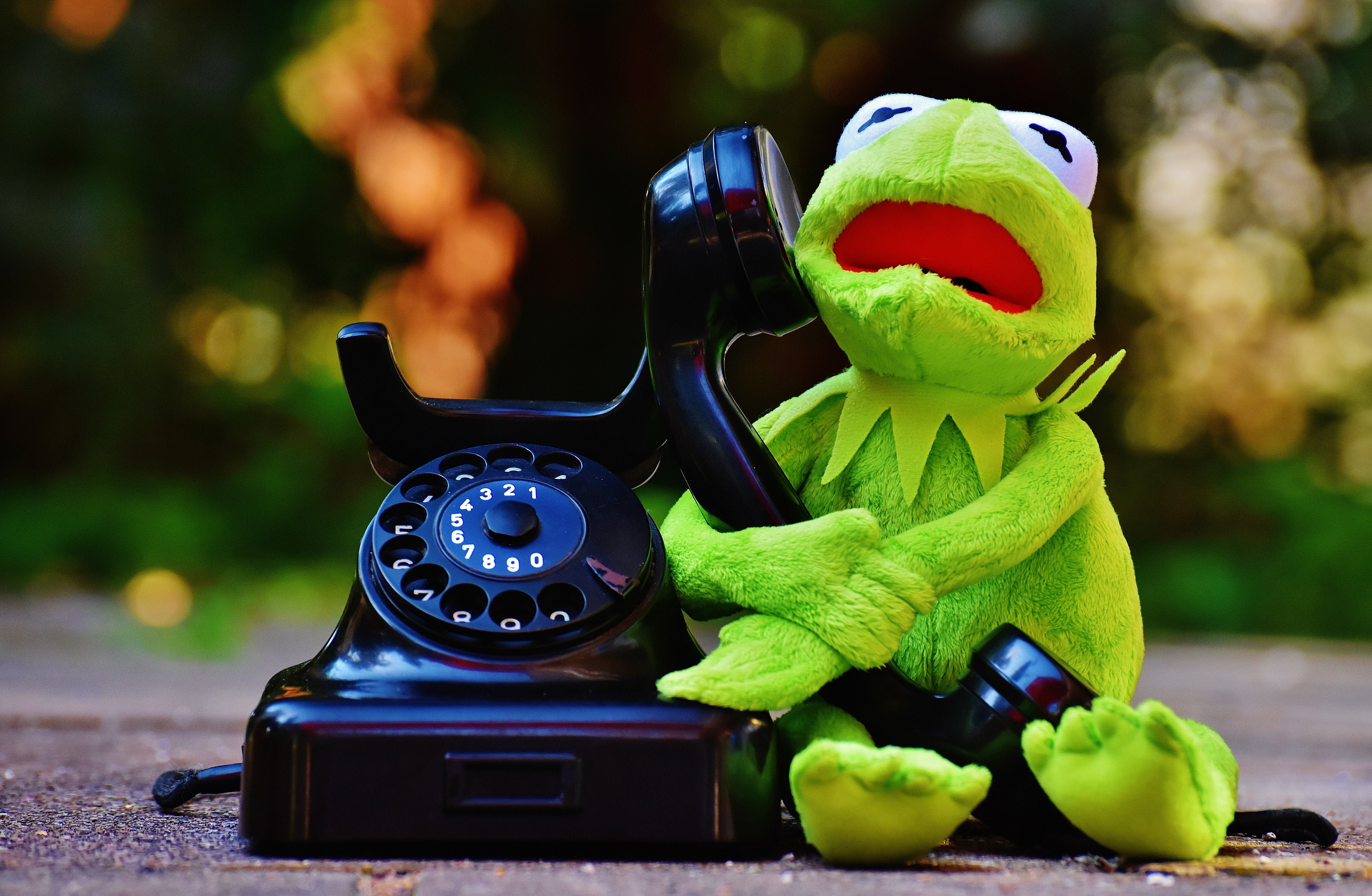 Free stock photo of animal, phone, funny, frog
