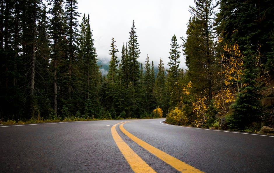 Gray and yellow road between forest