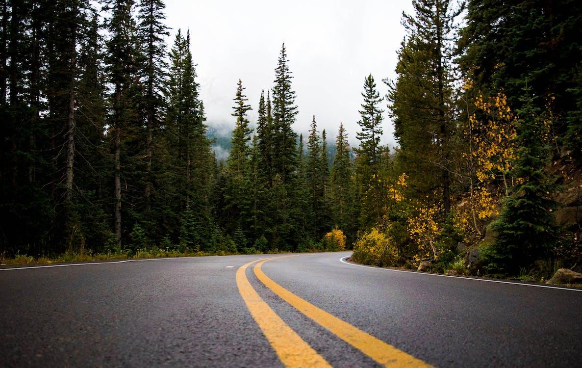 alberi, asfalto, autostrada