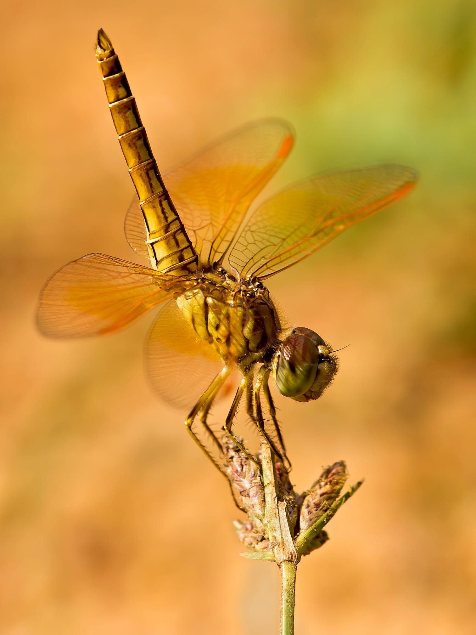 Brown Dragonfly Perching on Flower Bu