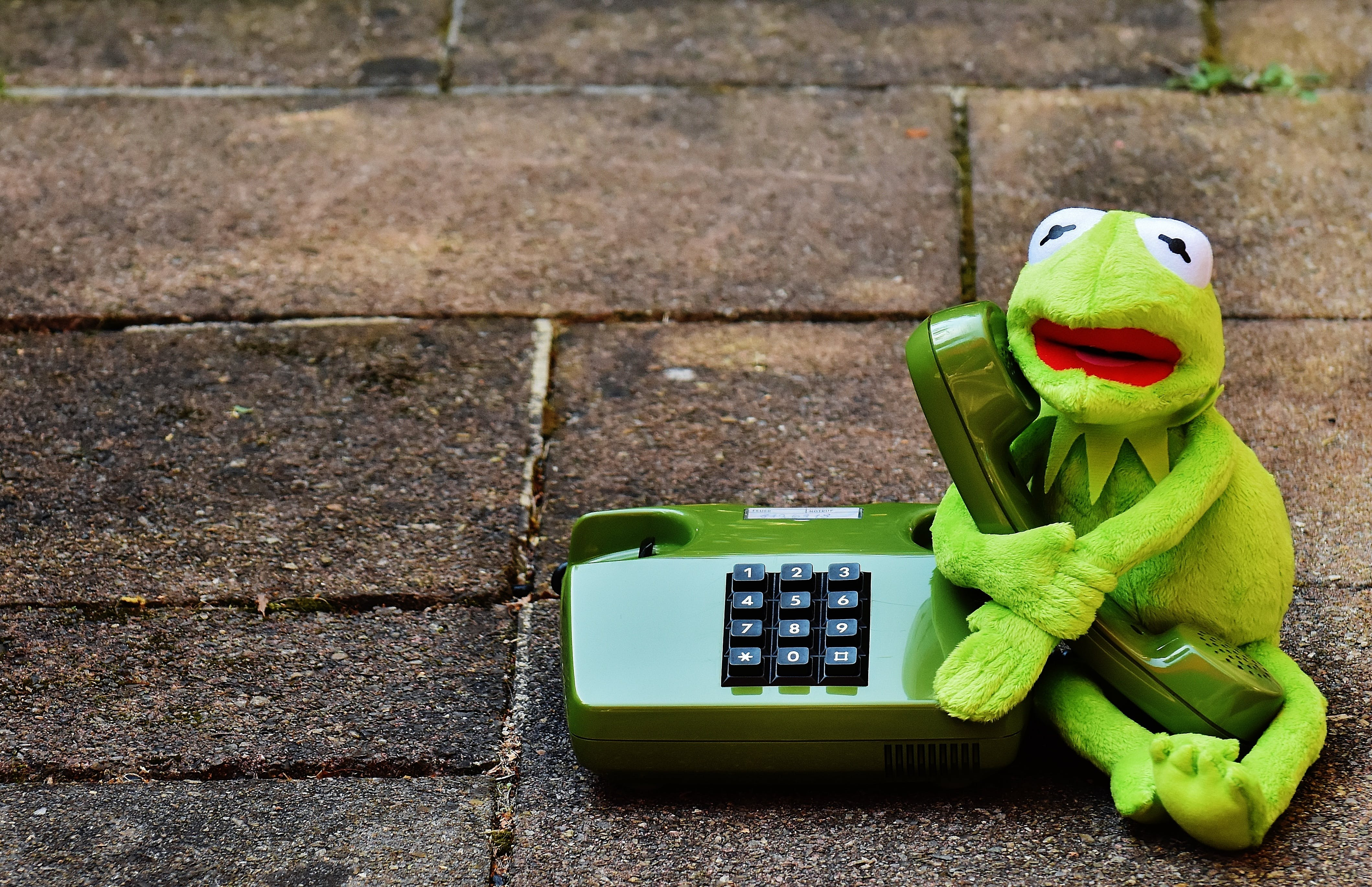 Green Frog Holding A Green Desk Phone