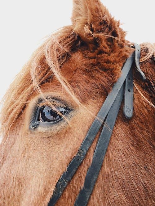 Foto profissional grátis de animal, animal doméstico, bicho, cabeça