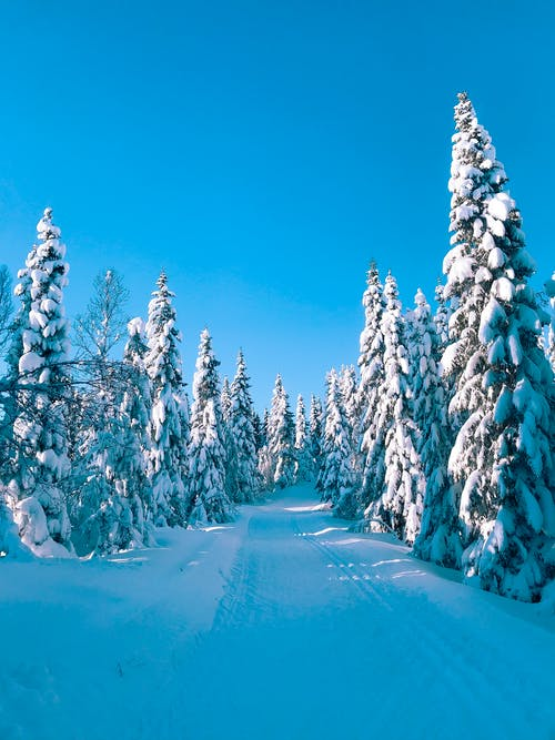 Photos gratuites de arbres, bois, couvert de neige, enneigé