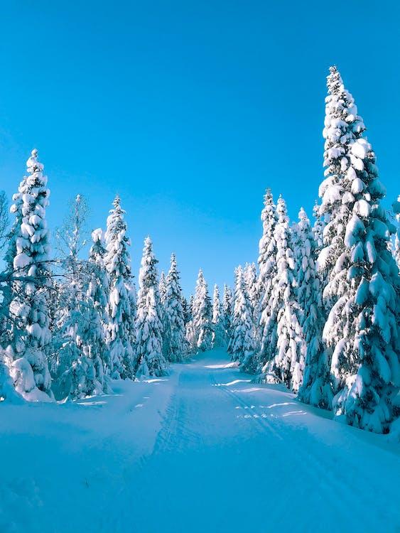γραφικός, δασικός, δάσος