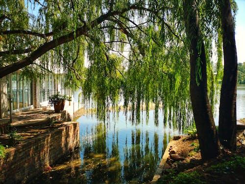 Ingyenes stockfotó fa, folyó, környezet, park témában