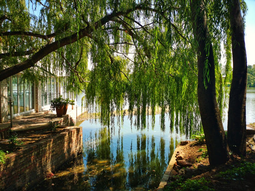 Calm body of water under green leaf tree