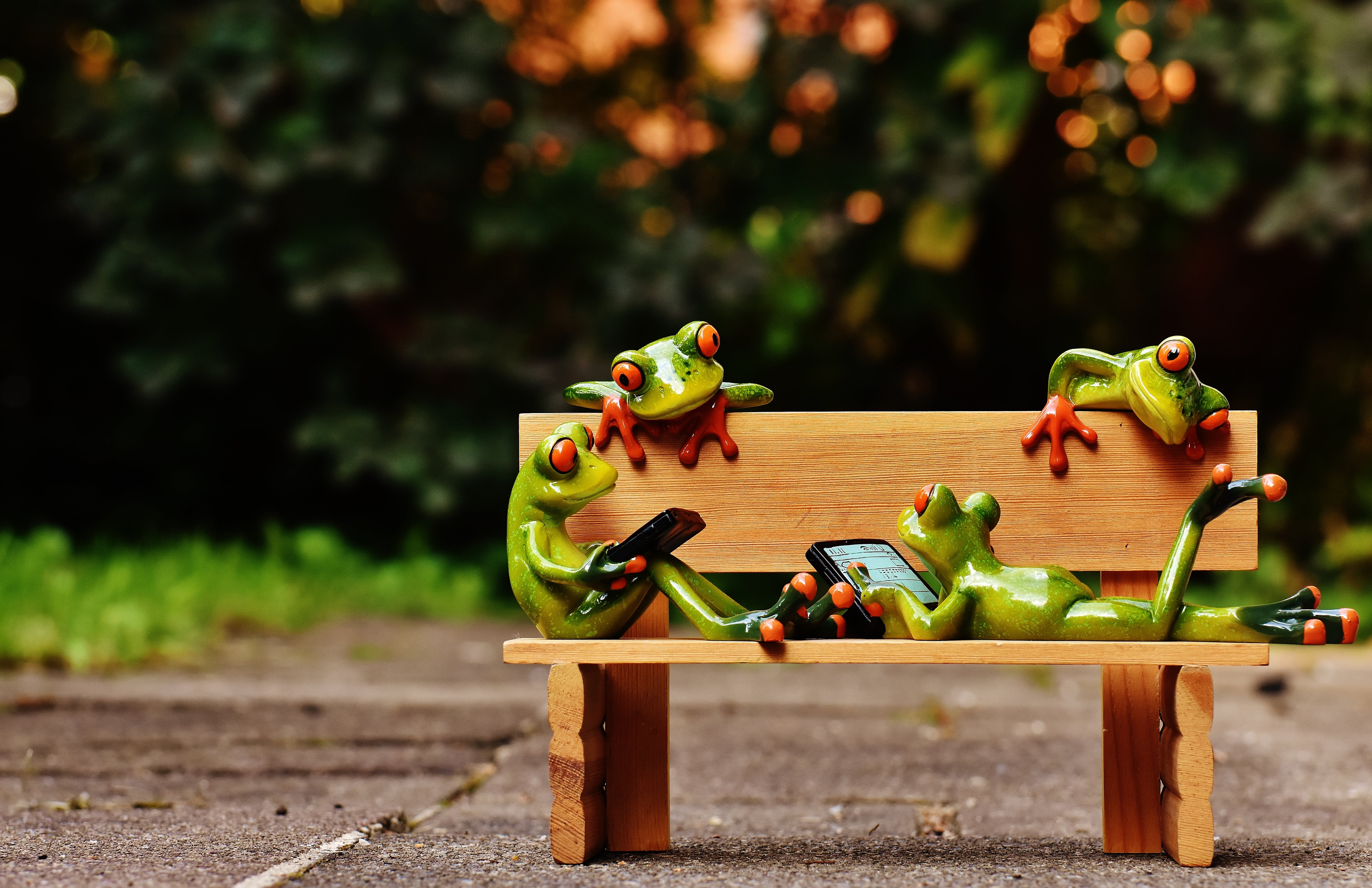 Free stock photo of bench, relaxation, animal, cute