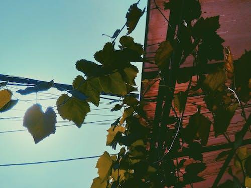 Foto d'estoc gratuïta de #naturalesa, #outdoorchallenge, blau, cel blau