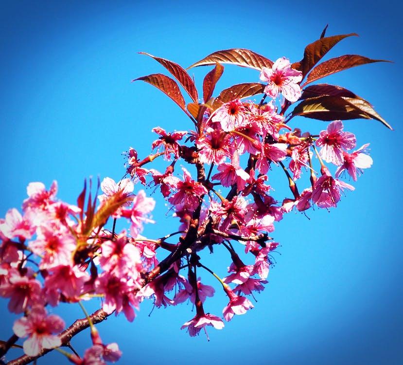 bakgrund, blå himmel, blomma