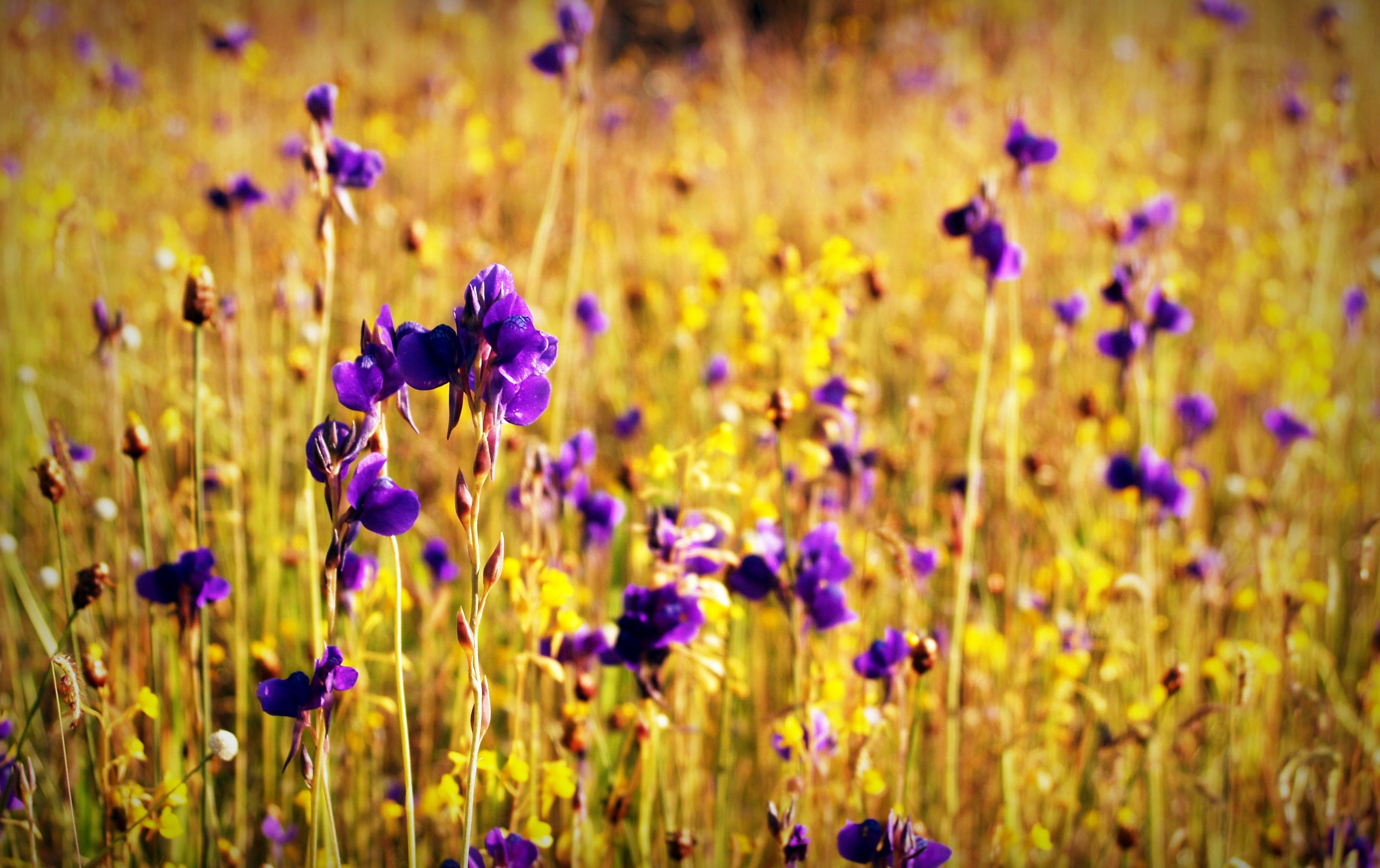 Free stock photo of landscape, nature, love, romantic