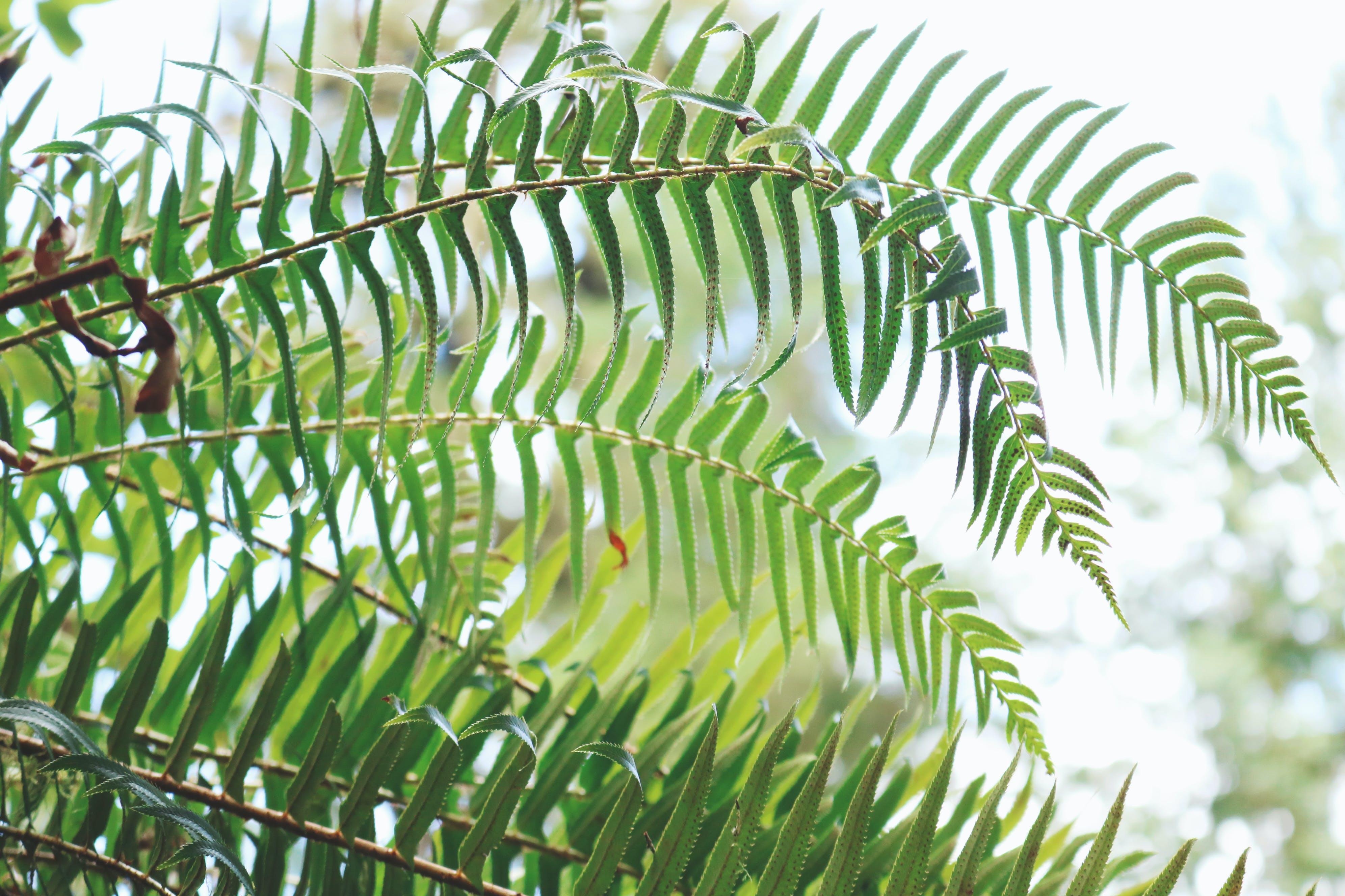 Základová fotografie zdarma na téma kapradina, oregon, příroda, rostliny
