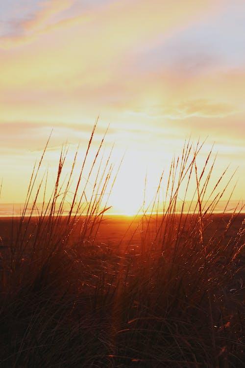 Foto profissional grátis de alvorecer, beira-mar, cair da noite, céu
