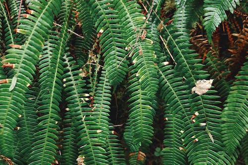 Fotobanka sbezplatnými fotkami na tému papraď, rastlina, veľký list tropickej rastliny, zelená