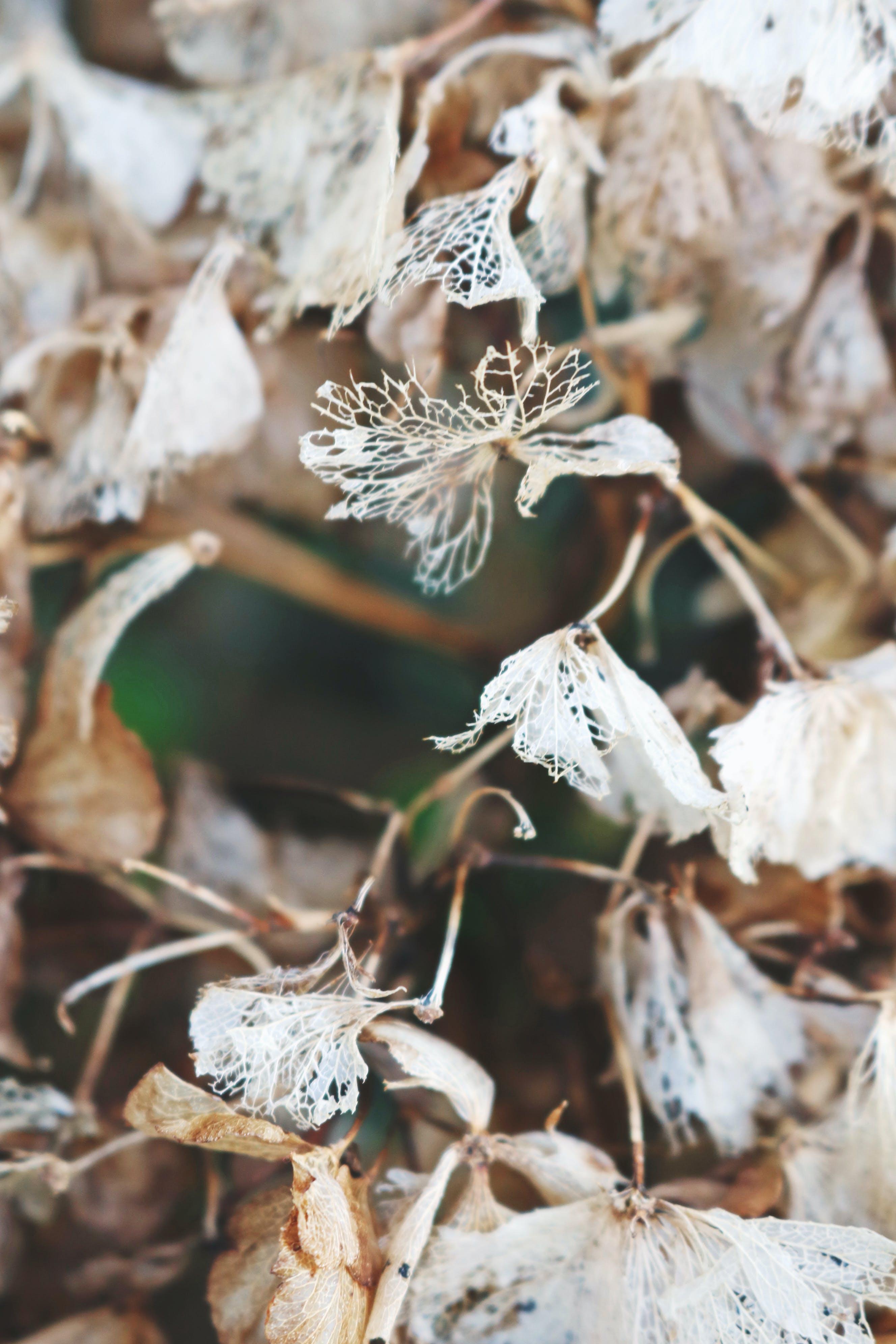 açık hava, bitki, bozulan, bulanık arka plan içeren Ücretsiz stok fotoğraf
