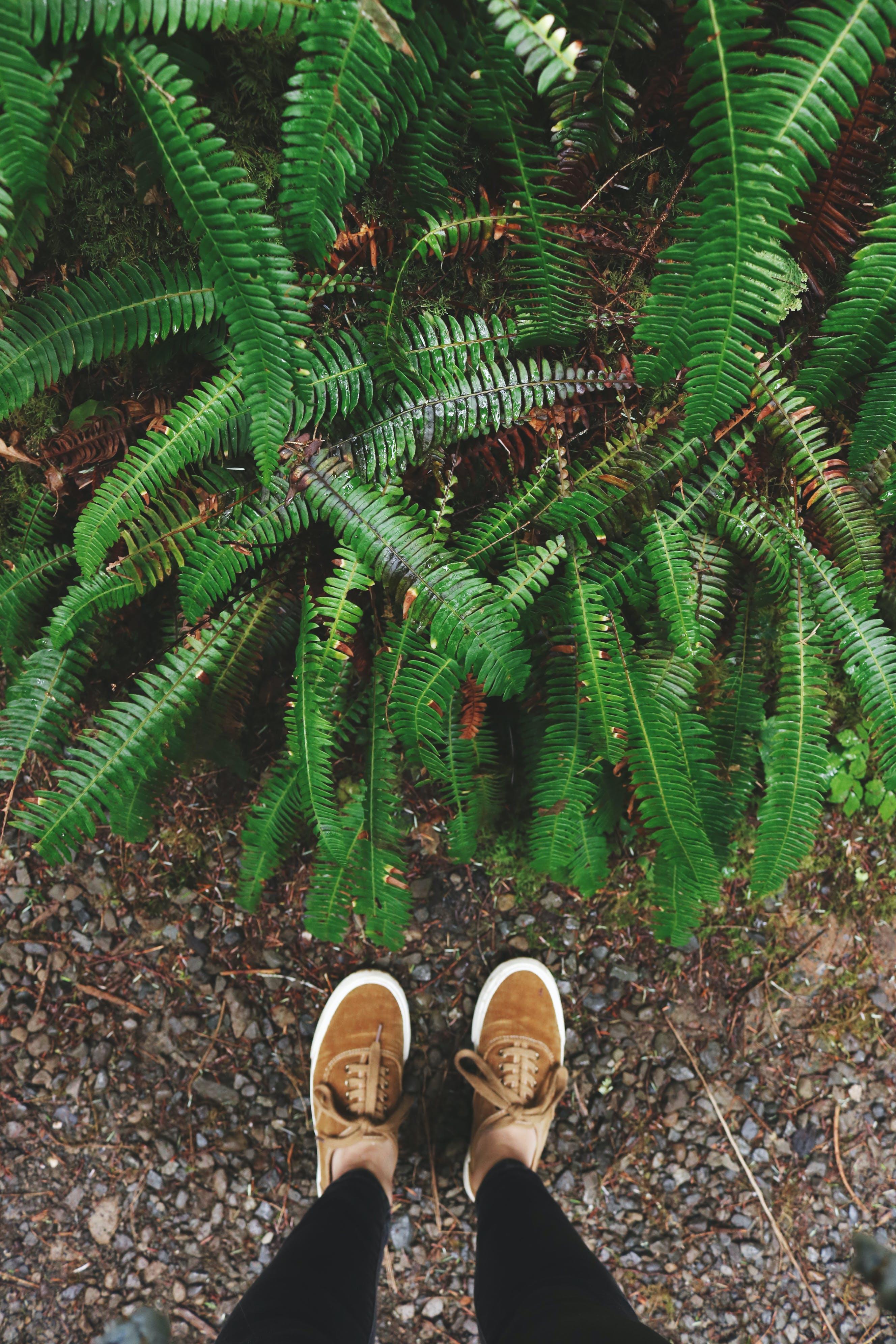 ayakkabı, ayakkabılar, ayaklar, bitki içeren Ücretsiz stok fotoğraf