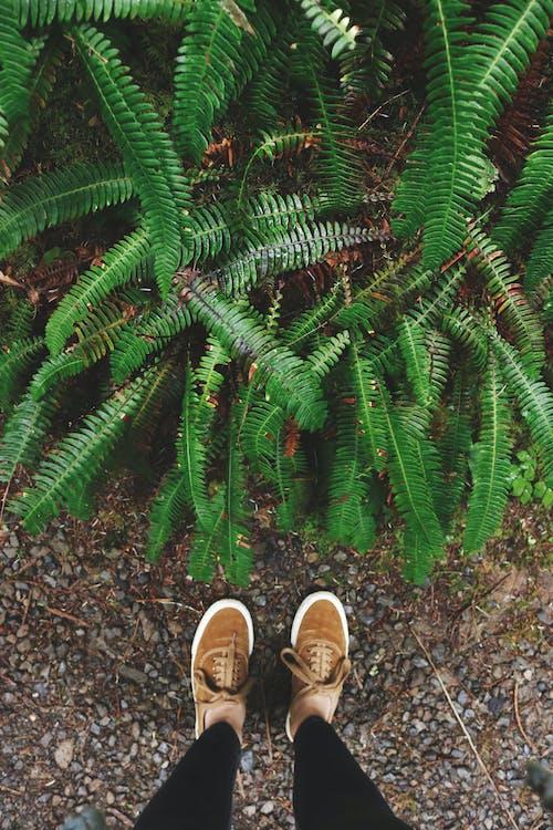Бесплатное стоковое фото с завод, ноги, обувь, папоротник