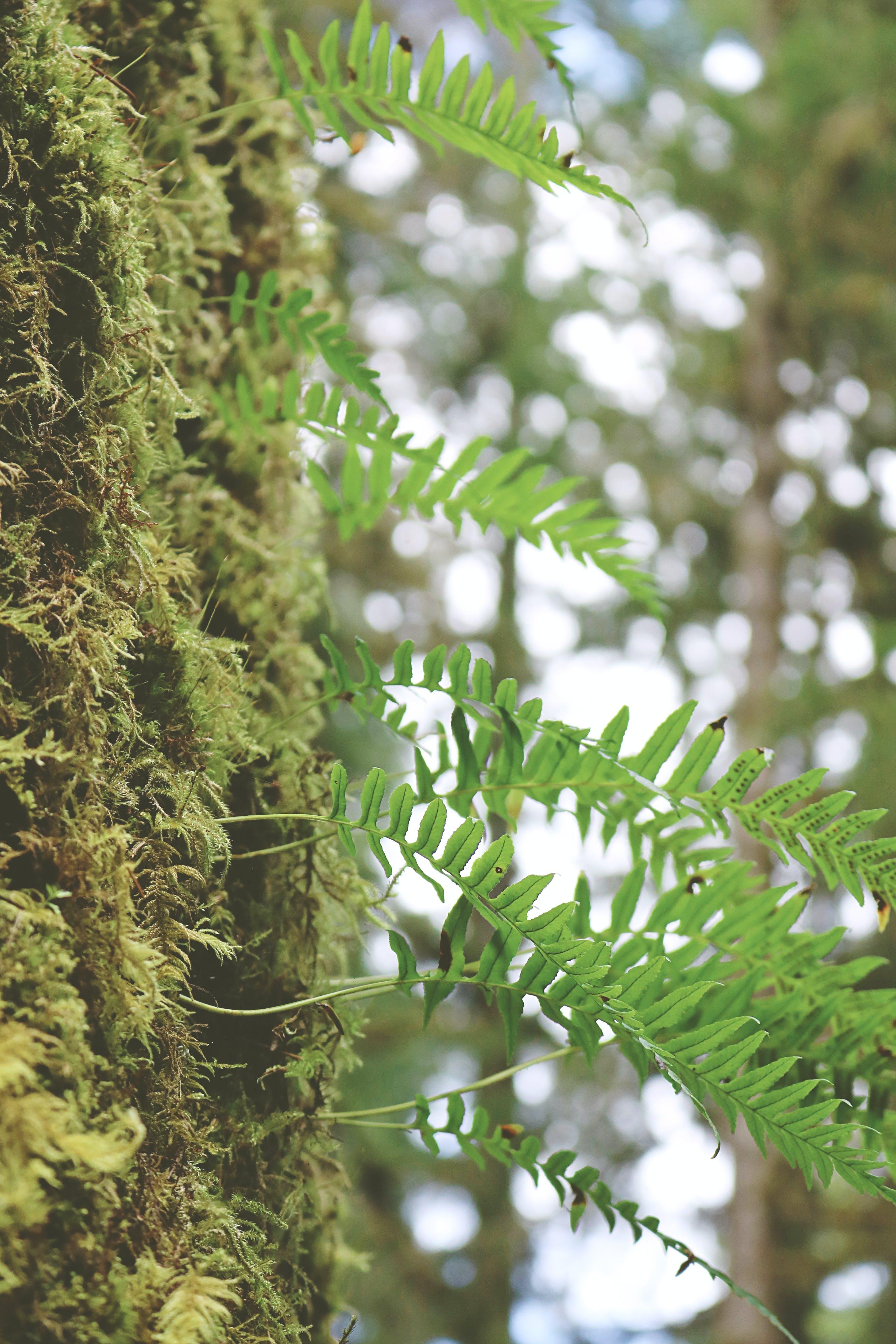 Základová fotografie zdarma na téma kapradina, les, obloha, příroda