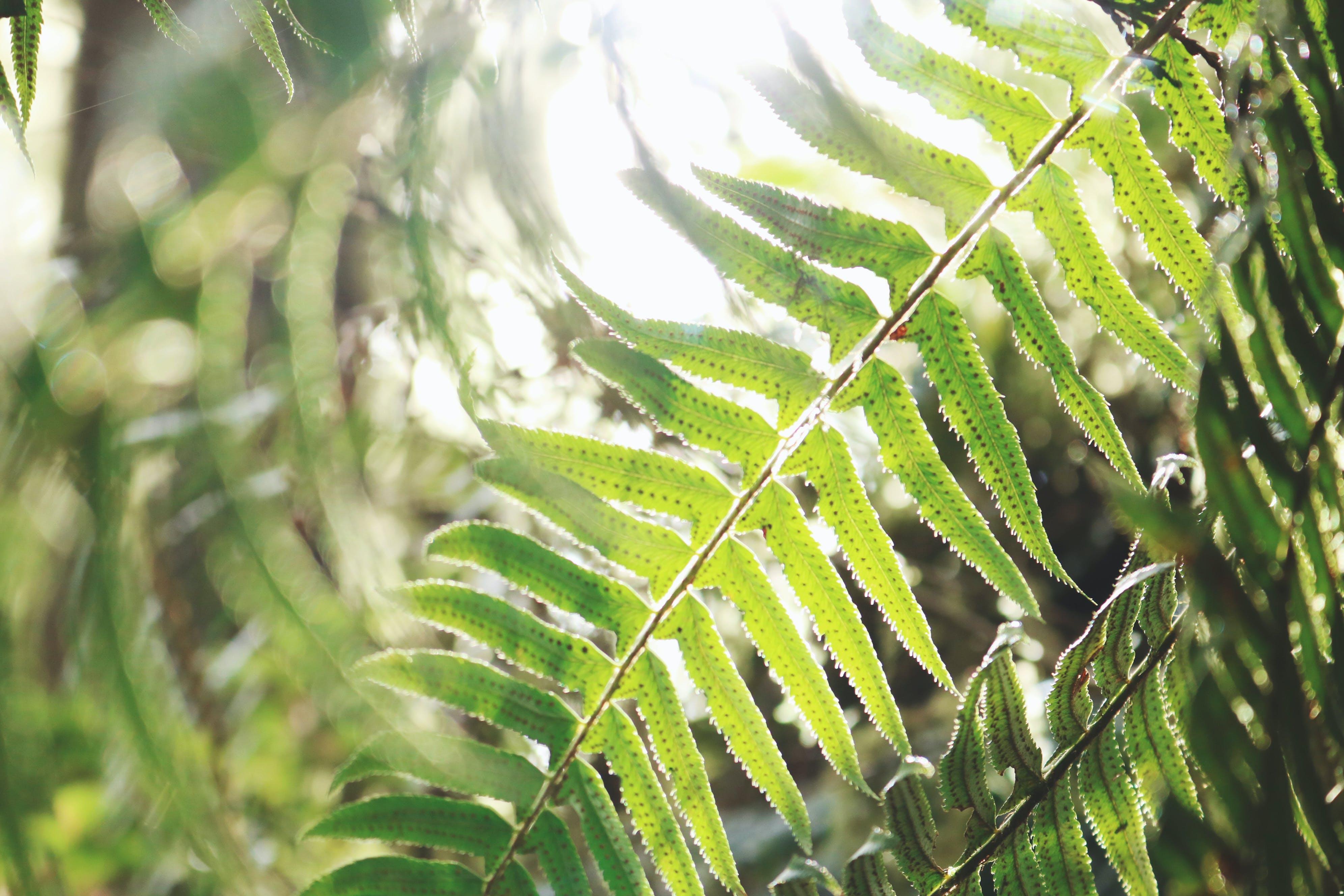 bitki, doğa, eğrelti otu, eğreltiotu içeren Ücretsiz stok fotoğraf