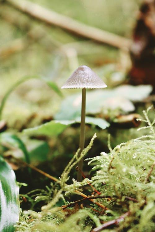 Бесплатное стоковое фото с гриб, дерево, маленький, мох