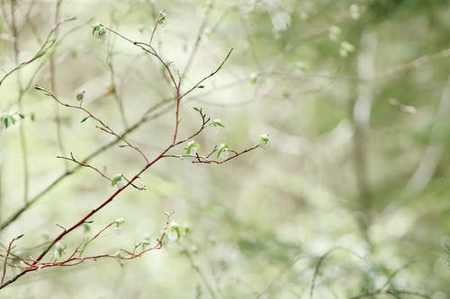 Immagine gratuita di foglie, impianto, macro, ramo