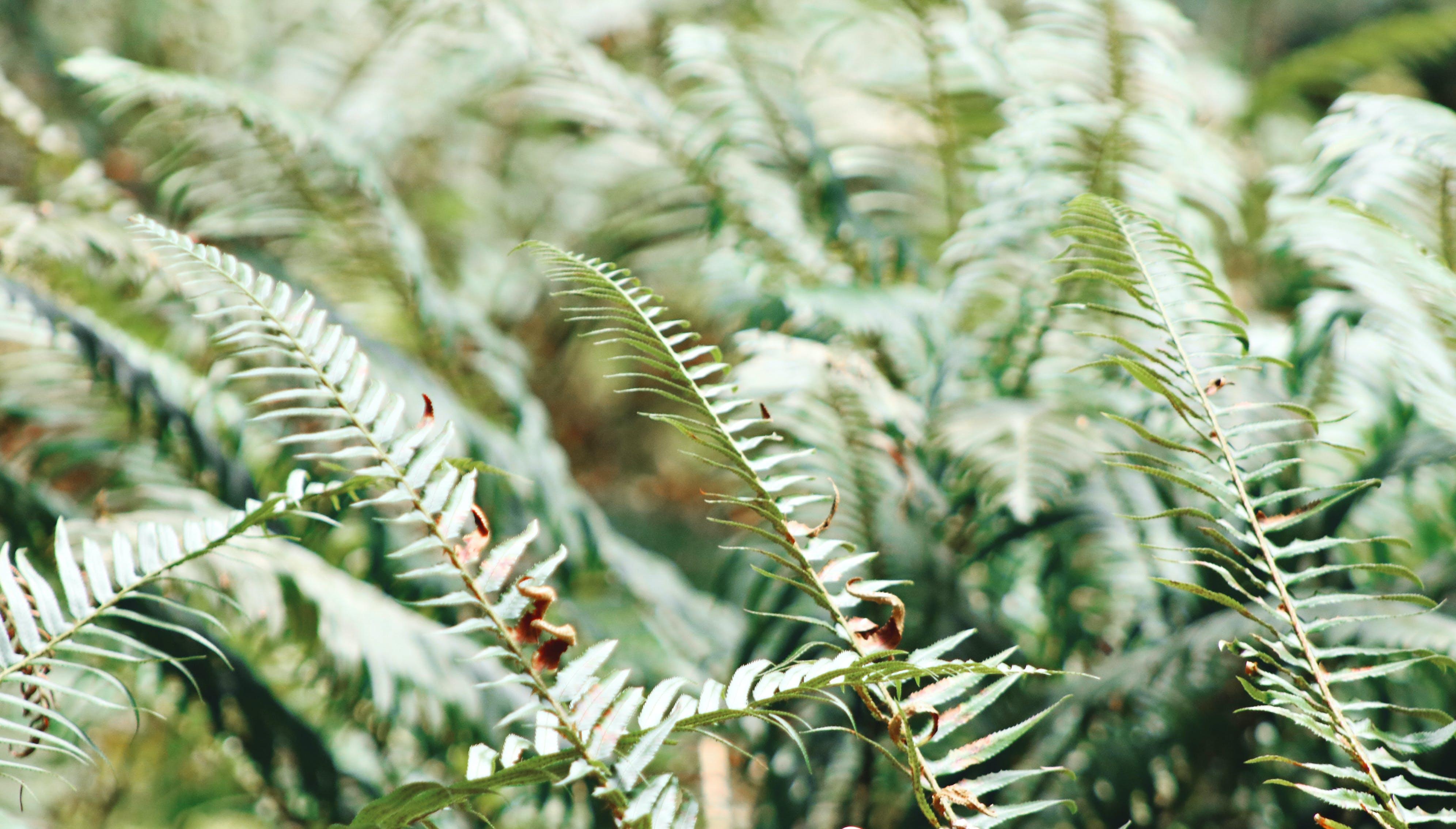 bitkiler, büyüme, doğa, eğreltiotu içeren Ücretsiz stok fotoğraf
