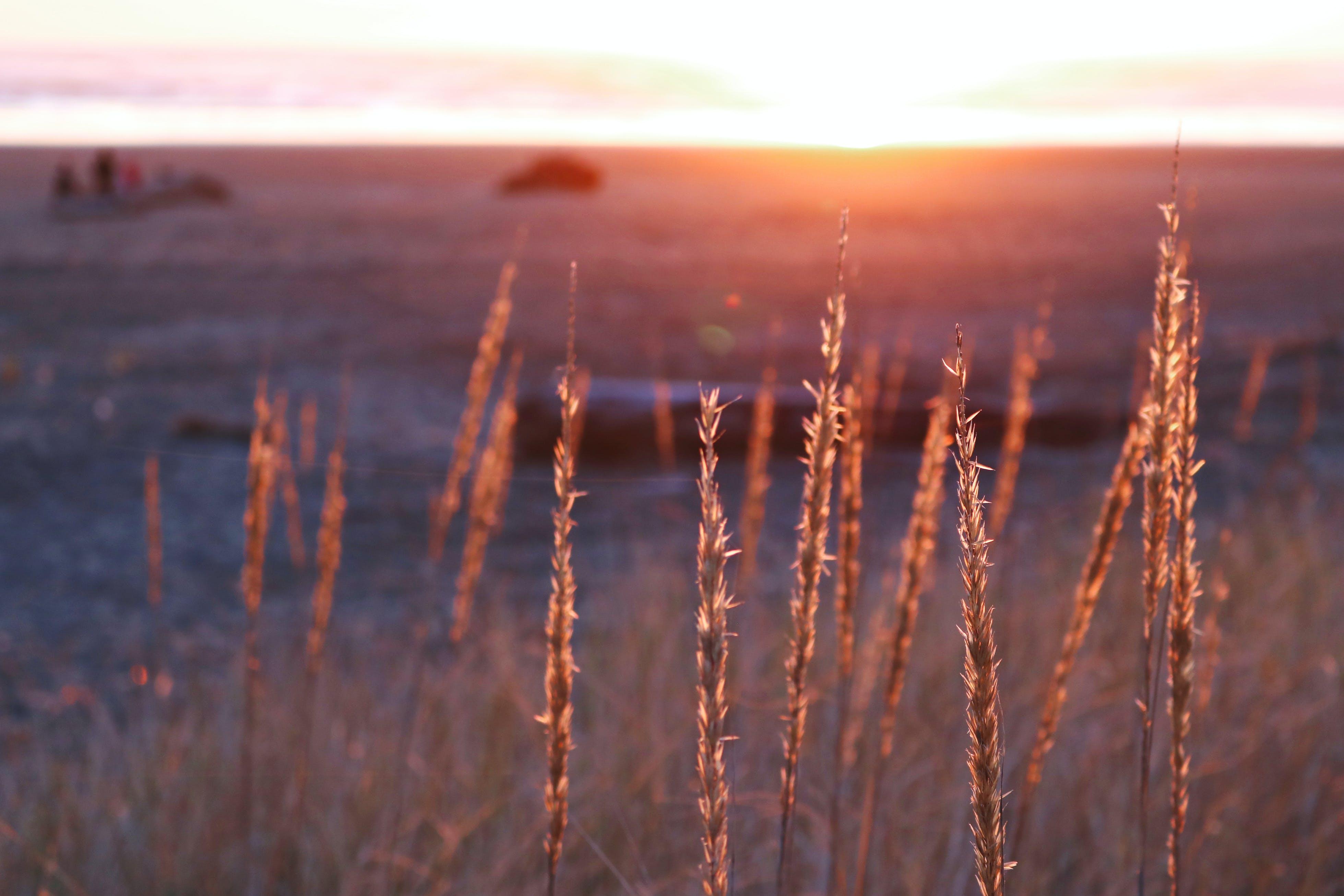 akşam karanlığı, bitki, çim, gün batımı içeren Ücretsiz stok fotoğraf