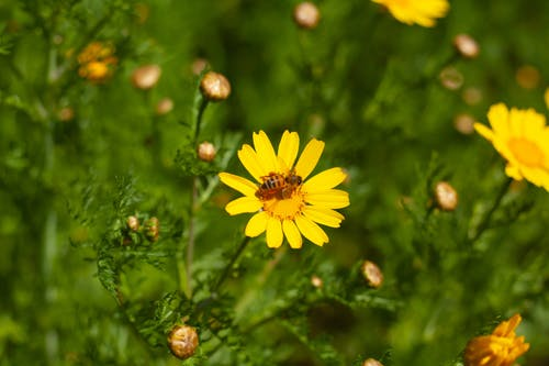 Бесплатное стоковое фото с detroithives, детройт, Пчеловодство, цветы
