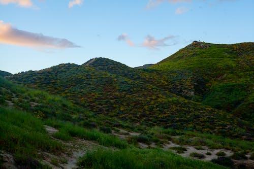 Бесплатное стоковое фото с pbesa, timothypaule, горы, маковые поля