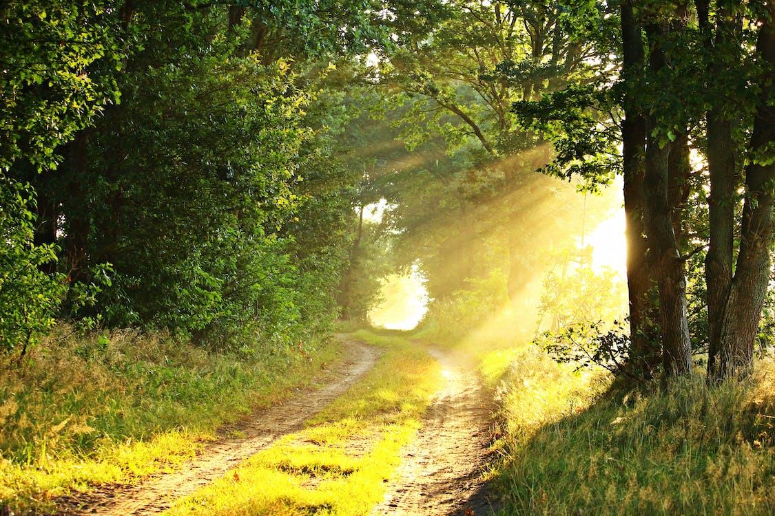 erdő, fák, fény