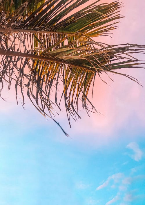 Two Green Palm Leaves on Low Angle Photo