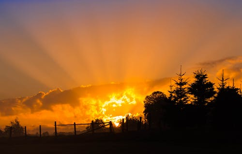 Schattenbildfotografie Des Baumes Während Des Sonnenuntergangs