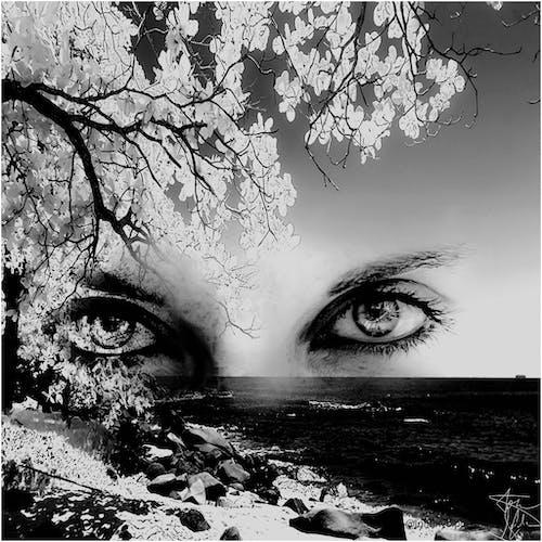 Gratis lagerfoto af blandet, øjne, sort/hvid