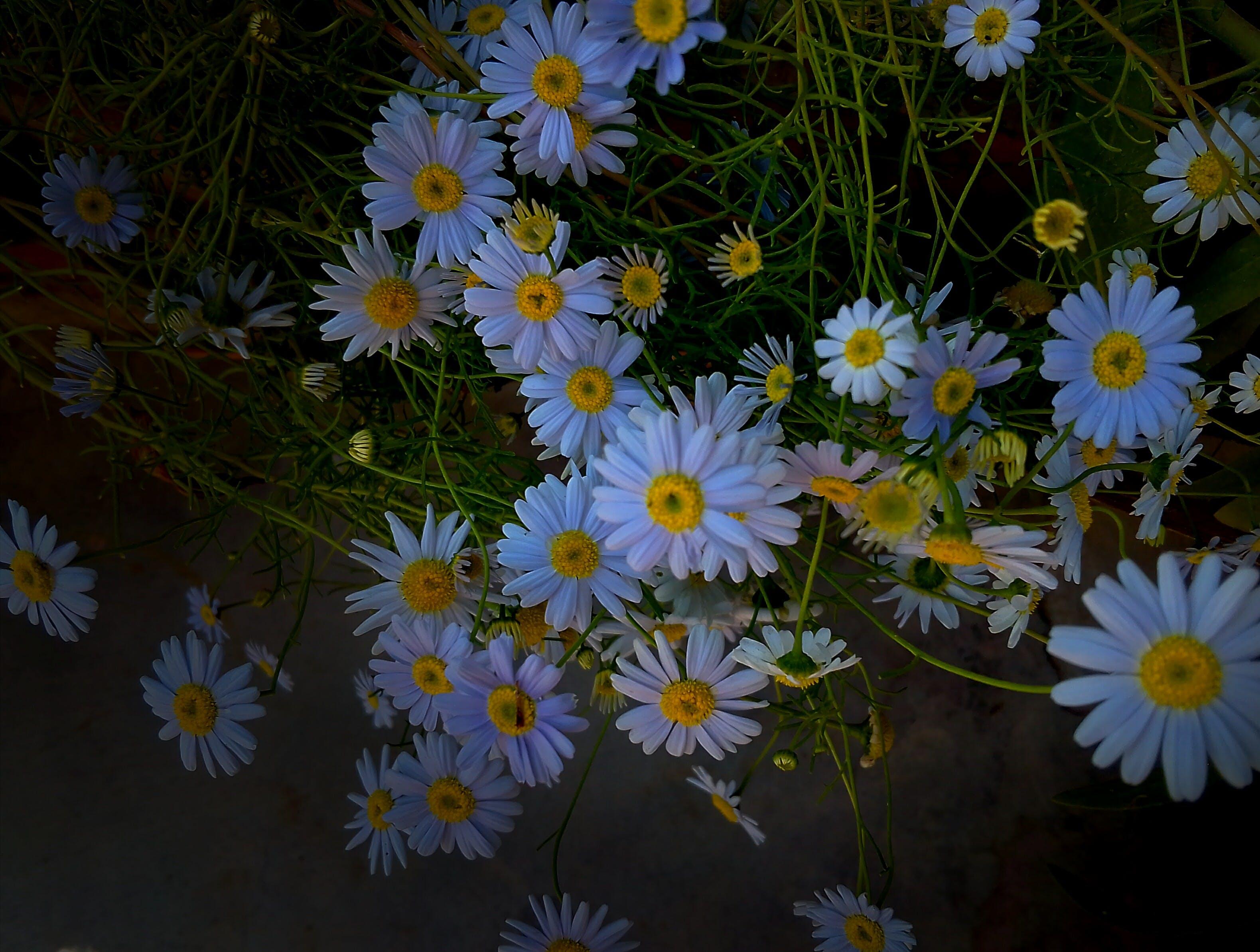 Gratis lagerfoto af 4k-baggrund, baggrund, baggrundsbillede, blå baggrund