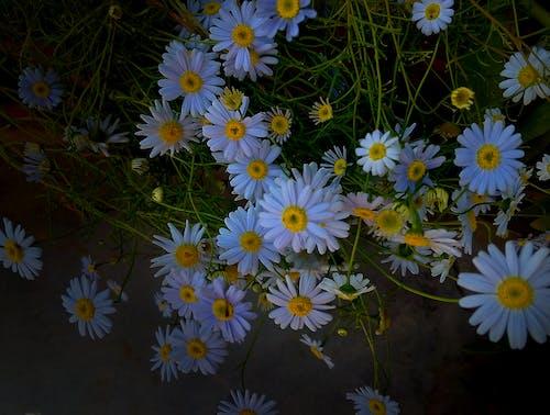 Ingyenes stockfotó 4k-háttérkép, asztali háttérkép, Első virágok, friss virágok témában