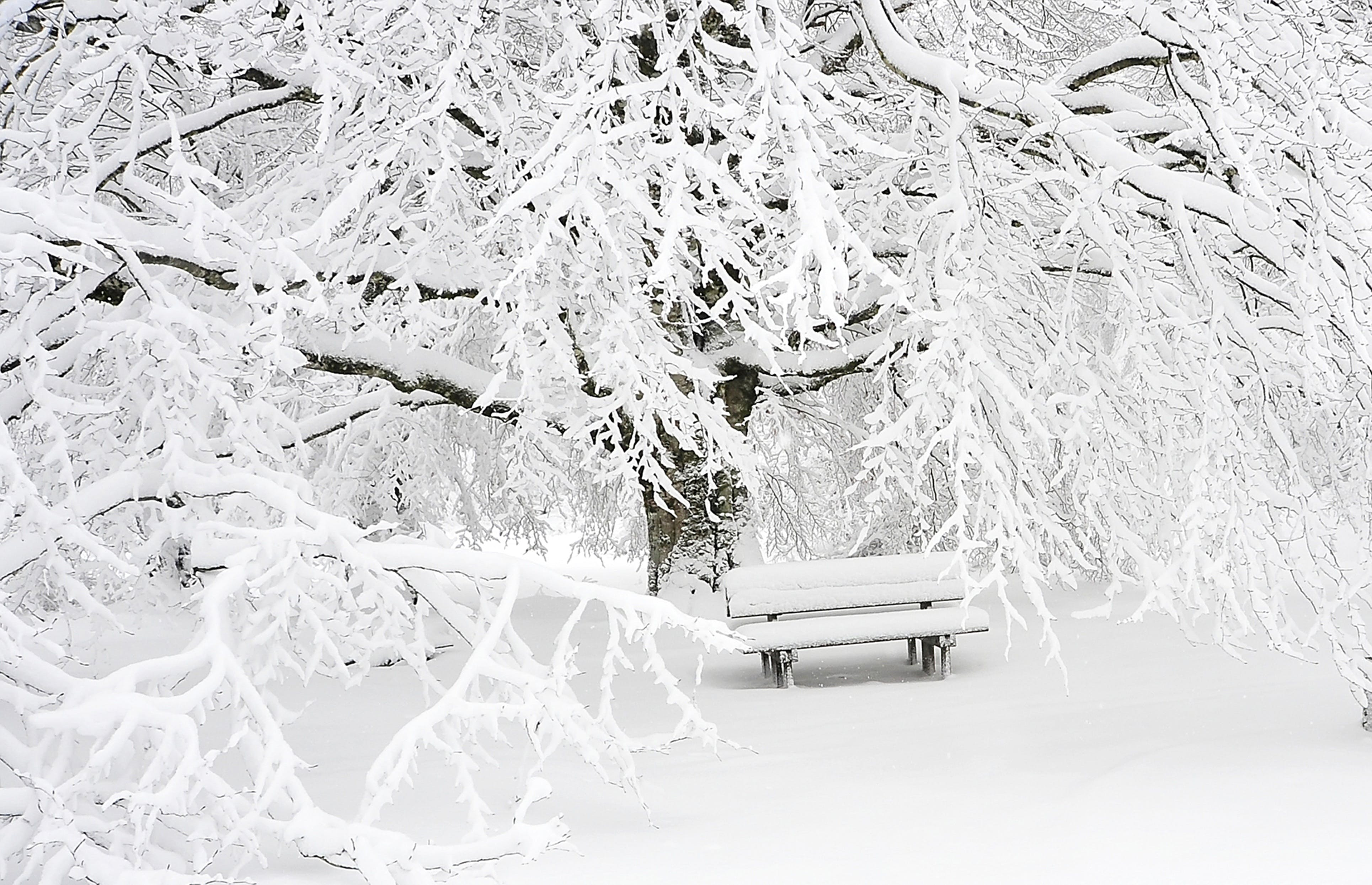Snow Covered Bench Near Snow Covered Bare Tree
