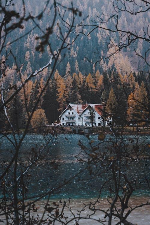 Foto d'estoc gratuïta de a l'aire lliure, aigua, arbres, boscos