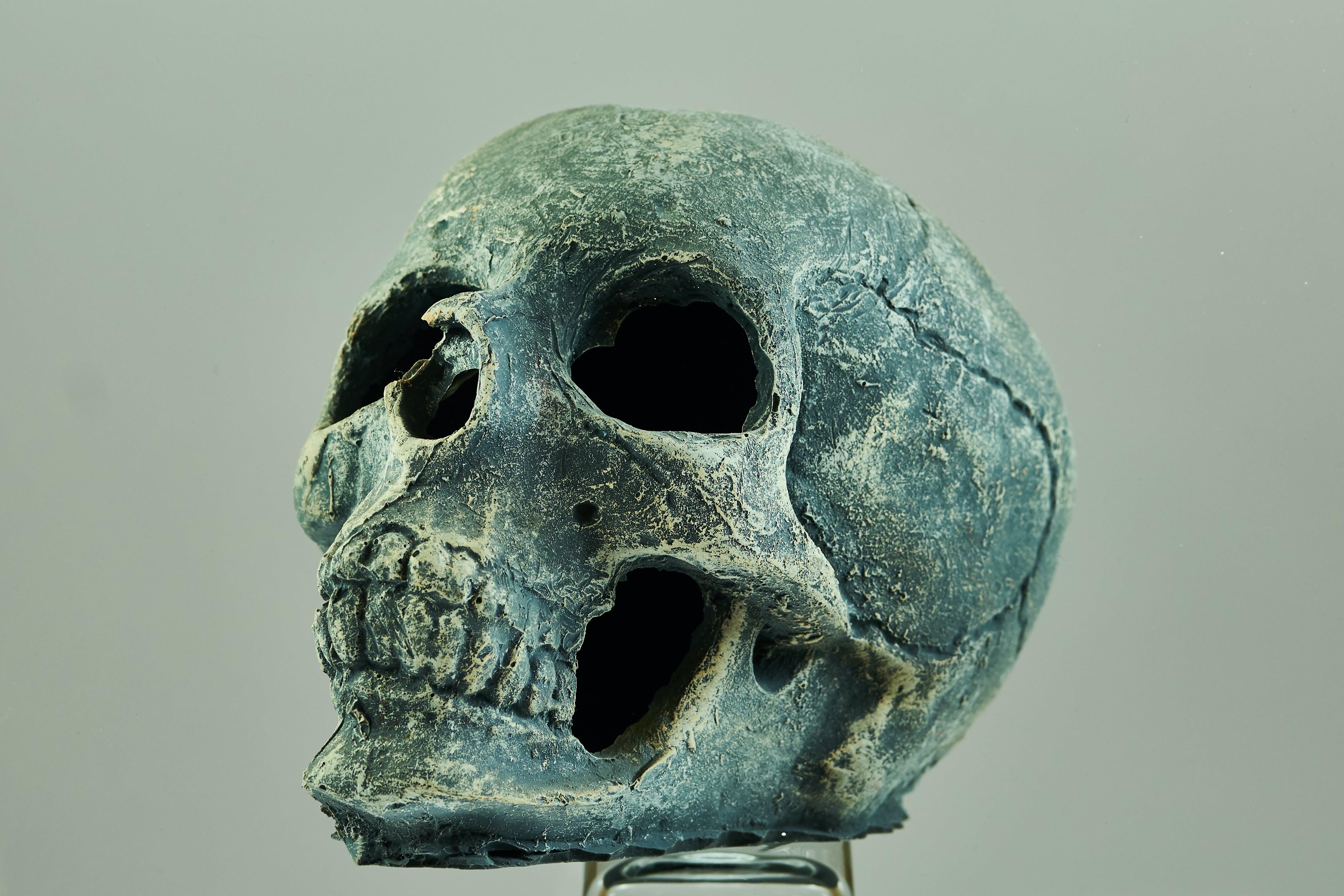 令人不寒而慄的, 怪異, 牙, 解剖學 的 免费素材照片