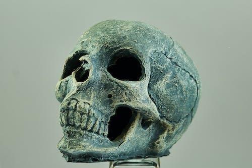 Gratis arkivbilde med anatomi, bein, hode, hodeskalle