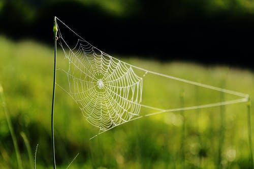 Spider Web On Grass