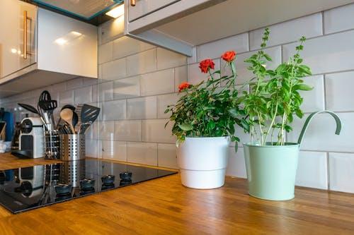 꽃, 실내, 주방, 화분 식물의 무료 스톡 사진