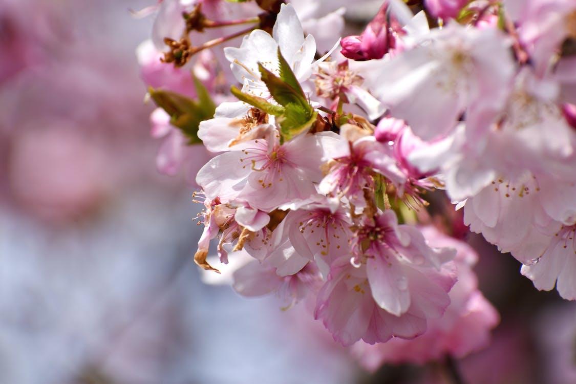 jar, kvety, pružina