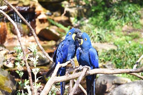 Gratis stockfoto met dierentuin, papegaai, vogel
