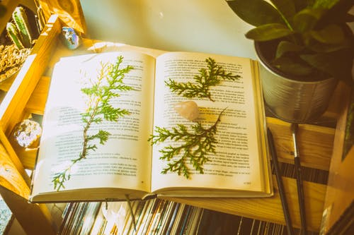 Fotos de stock gratuitas de encuadernaciones de libros, libro, página, papel