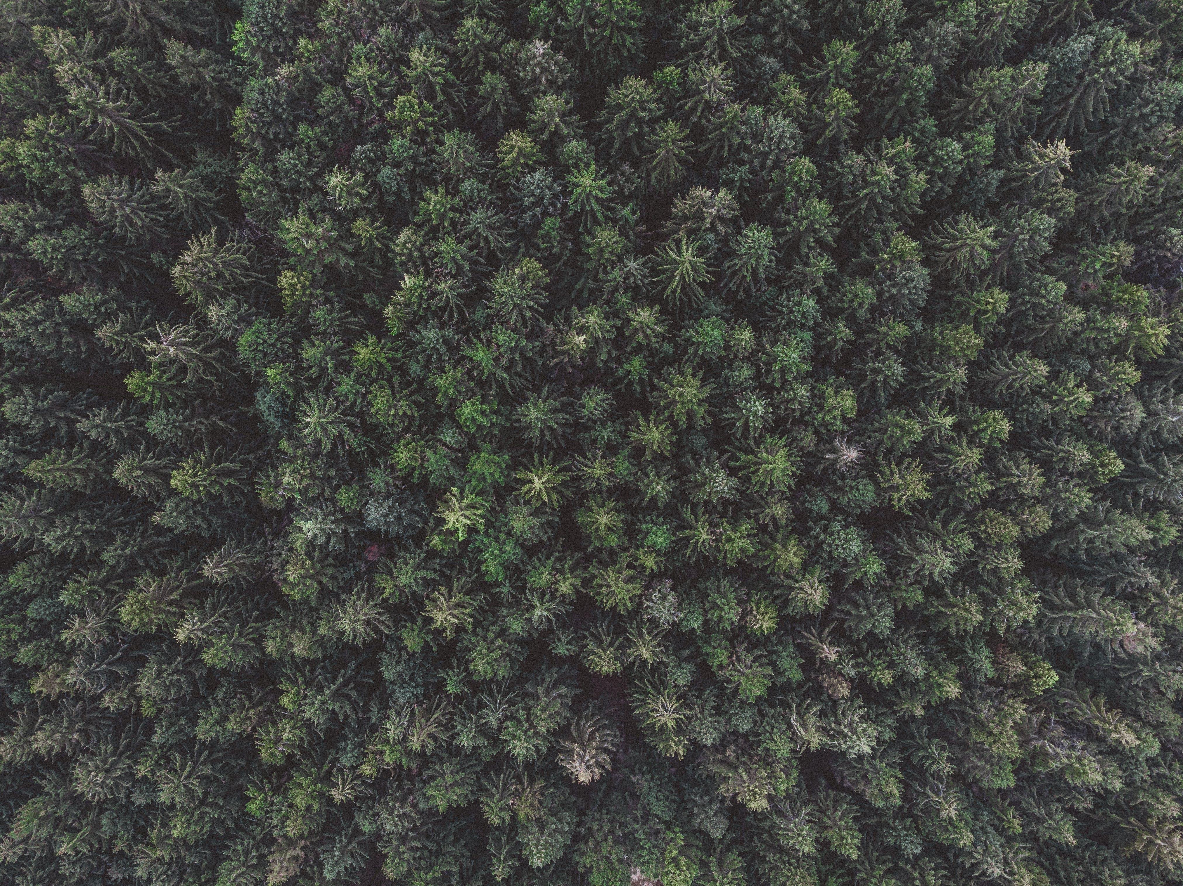 Gratis lagerfoto af fra oven, fugleperspektiv, luftfoto, skov