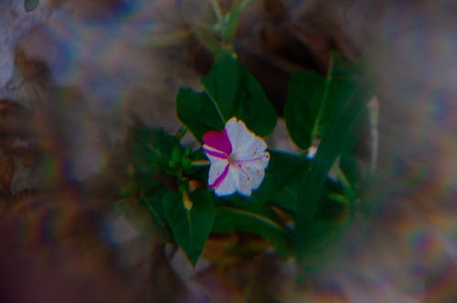 Foto d'estoc gratuïta de brot de flors, brots de flors, flor, florir