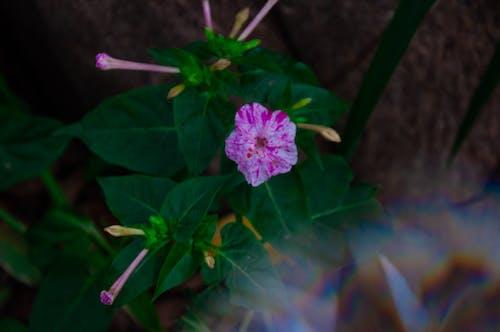 Foto d'estoc gratuïta de arc de Sant Martí, brot de flors, brots de flors, flor