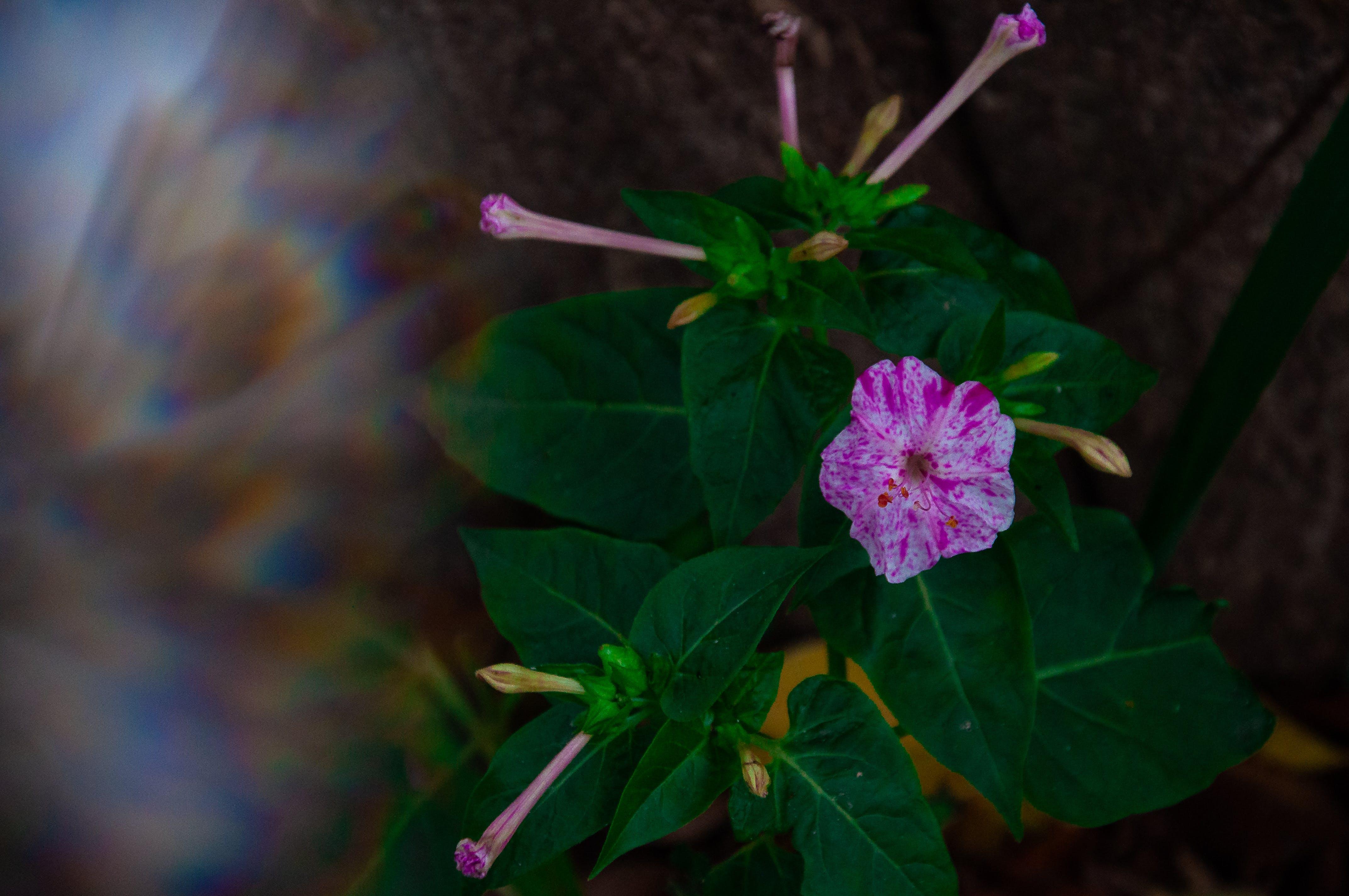 Безкоштовне стокове фото на тему «бутон, квітуче дерево, кольорові шпалери, Призма»