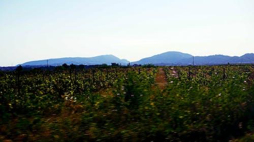 藍山, 龍 的 免費圖庫相片